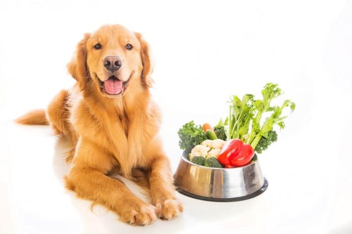 犬 生野菜